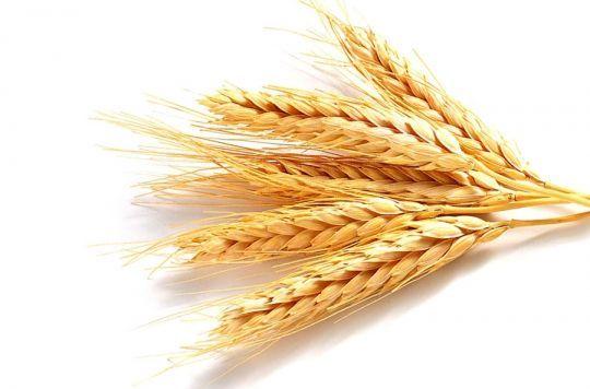 протеины пшеницы гидролизованные купить